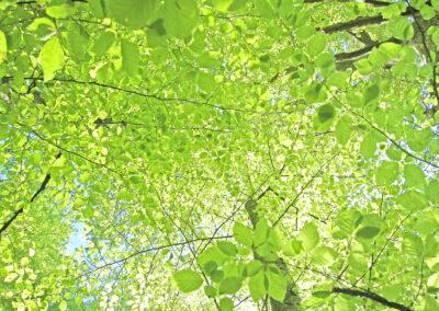 Unter dem Blätterdach