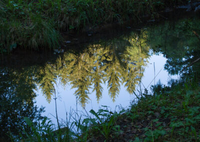 Spiegelung Wald im Wasser