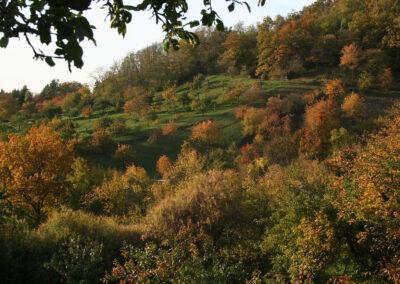 Streuobstwiesen im Herbst